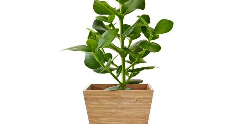 A green plant in a bamboo pot