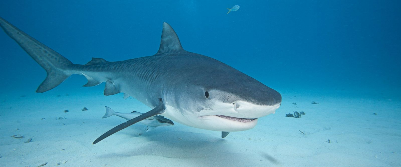 How to Stay Safe From Shark Attacks Over Fourth of July Weekend