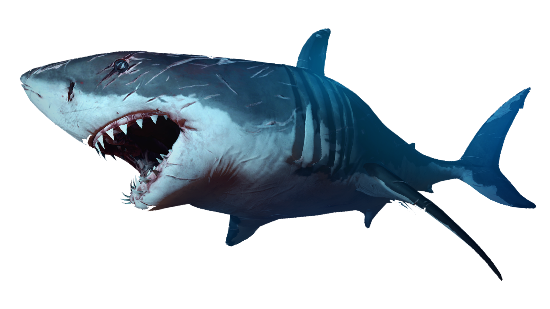 Battle Scared Shark