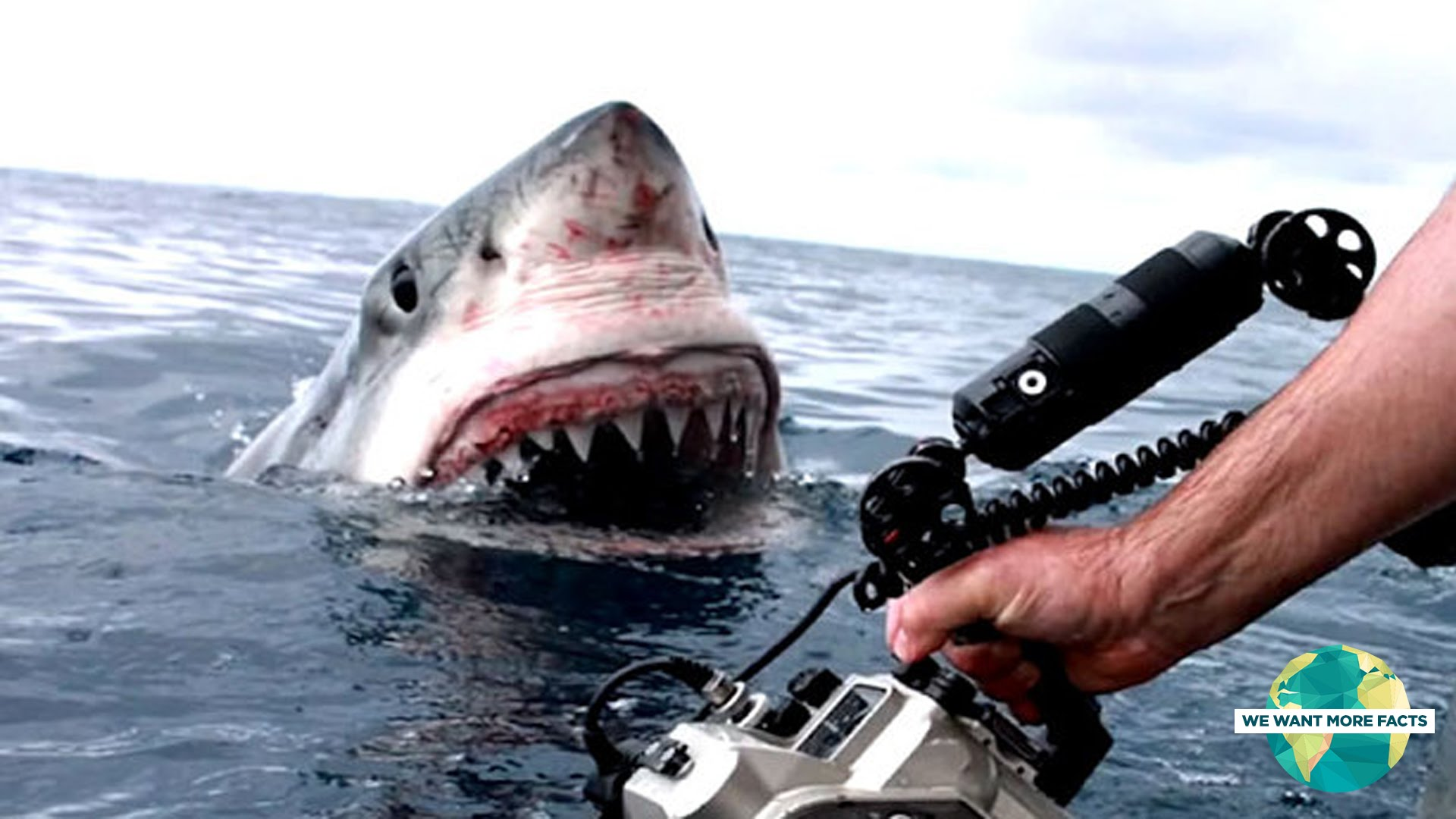 5 Horrifying Shark Encounters Caught On GoPro