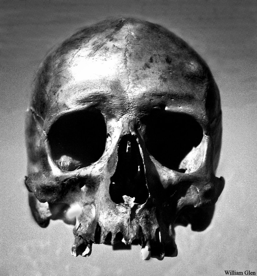 1000+ images about skull on Pinterest | Human skull