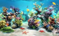 3D Fish Live Wallpaper For Pc