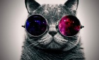 Awesome Cat Wallpaper