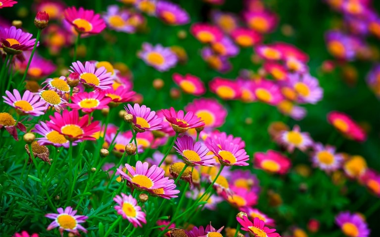 Beautiful Flower Wallpaper Free Download For Mobile