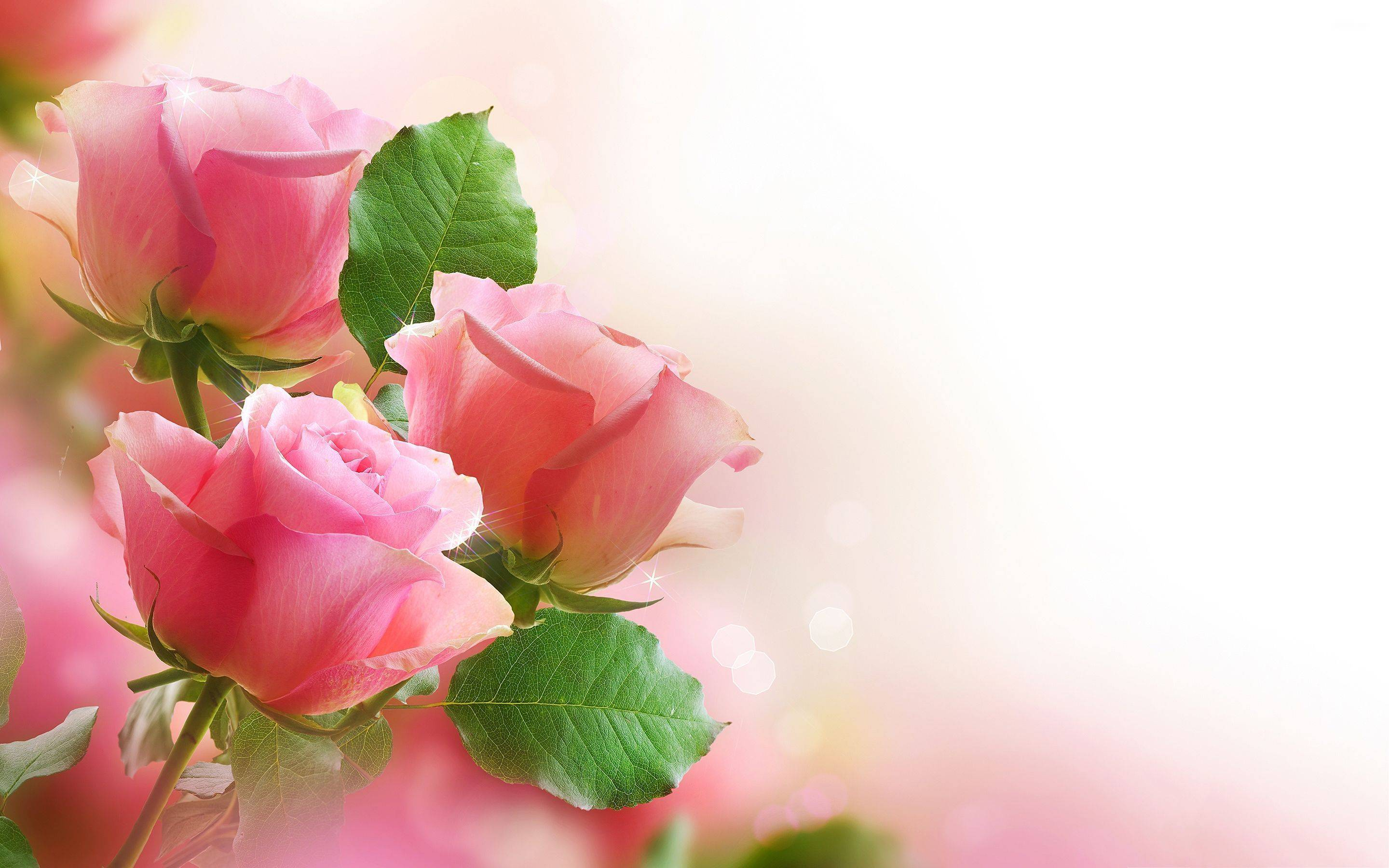 Beautiful Natural Flowers Wallpapers