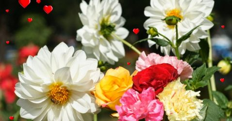 Beautiful Wallpapers Of Flowers Free Download