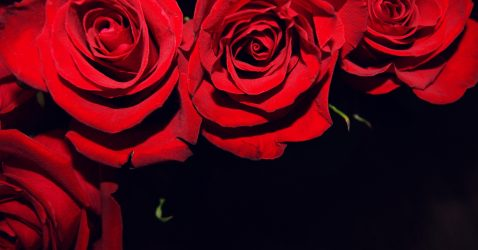 Black Wallpaper Red Flowers