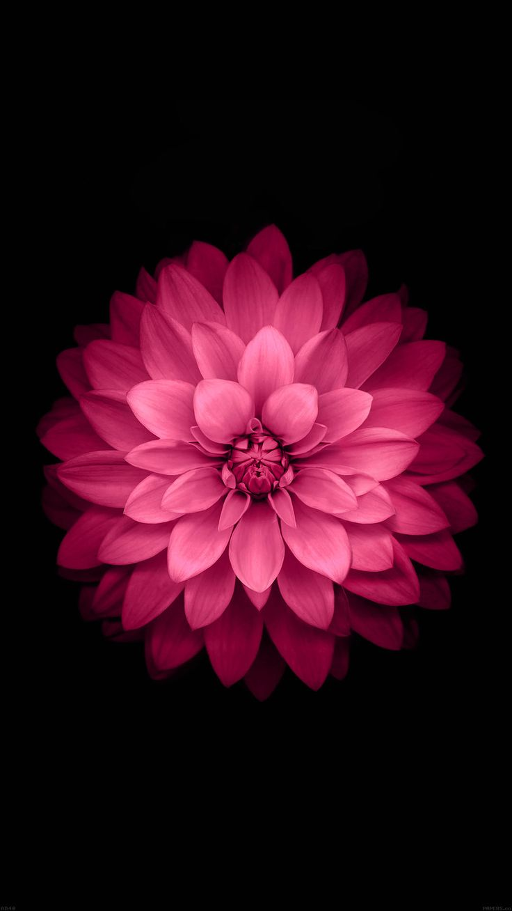 Download Black With Pink Flowers Wallpaper Gallery