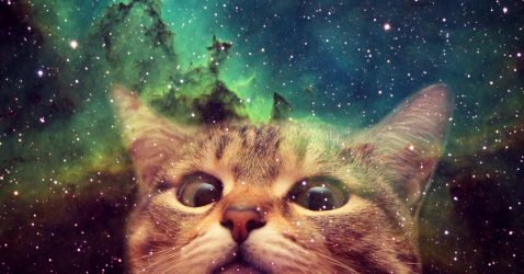 Cats In Space Wallpaper
