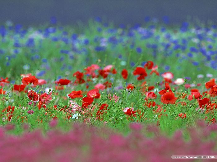 Country Flower Wallpaper