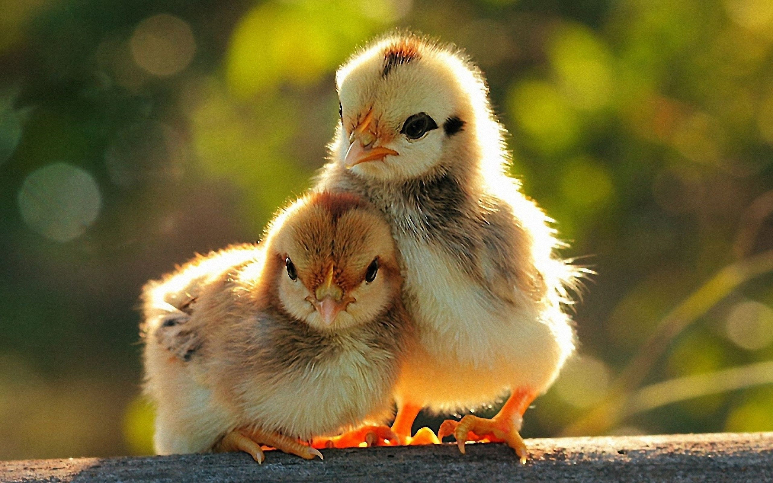 Cute Animals Wallpapers