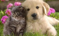 Cute Baby Animals Wallpapers