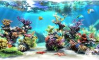 Fish Tank 3D Live Wallpapers
