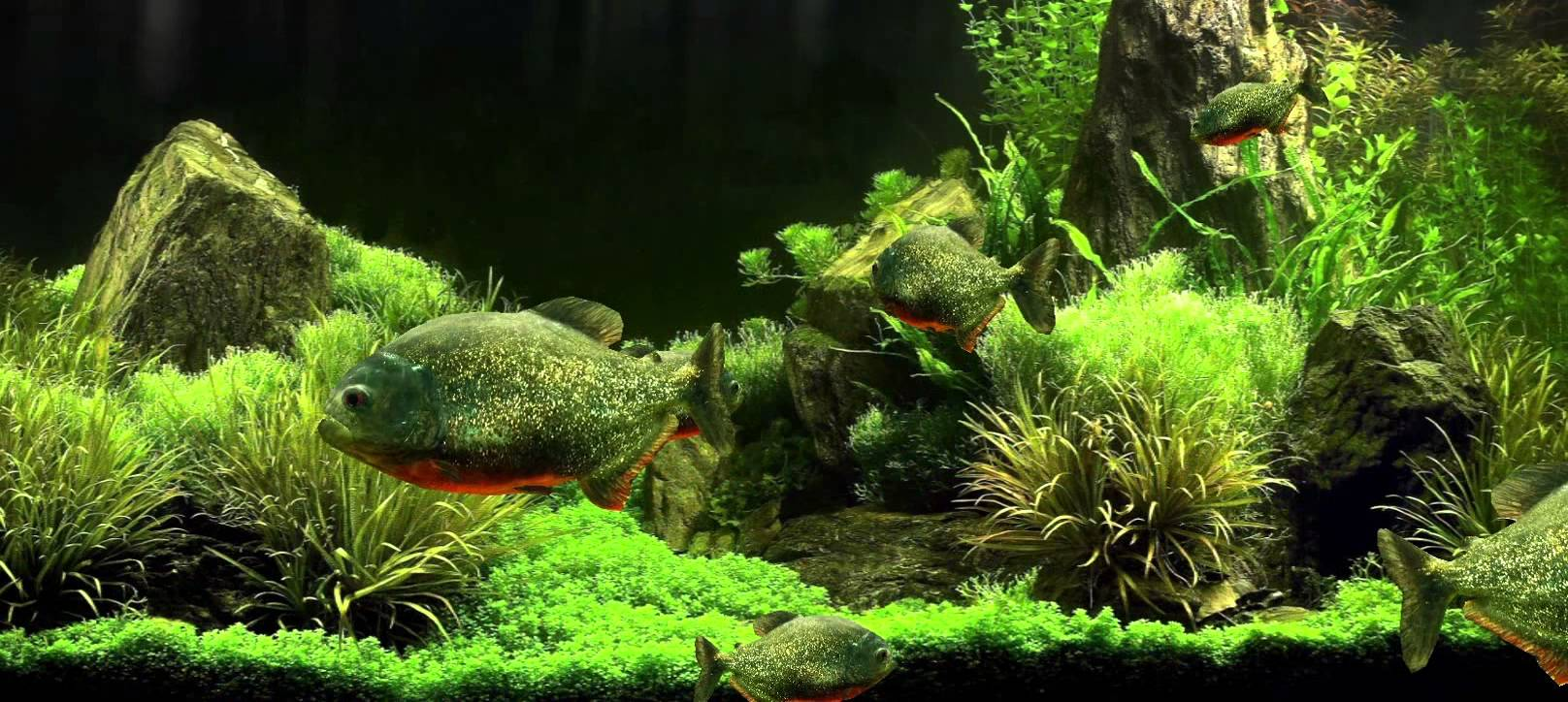 Download Fish Tank 3d Live Wallpapers Gallery