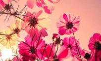 Flower Wallpaper For Iphone 5