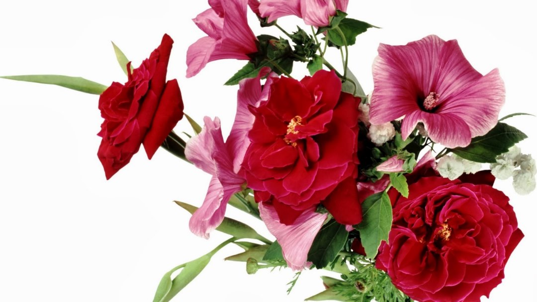 Flowers Wallpapers Free Download Pc