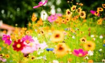 Free Desktop Wallpaper Summer Flowers