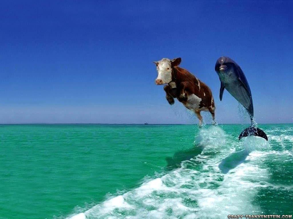 Funny Animals Wallpapers