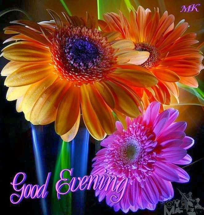 Download Good Evening Flowers Wallpapers Gallery