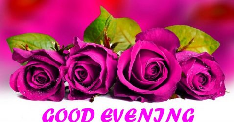 Good Evening Flowers Wallpapers