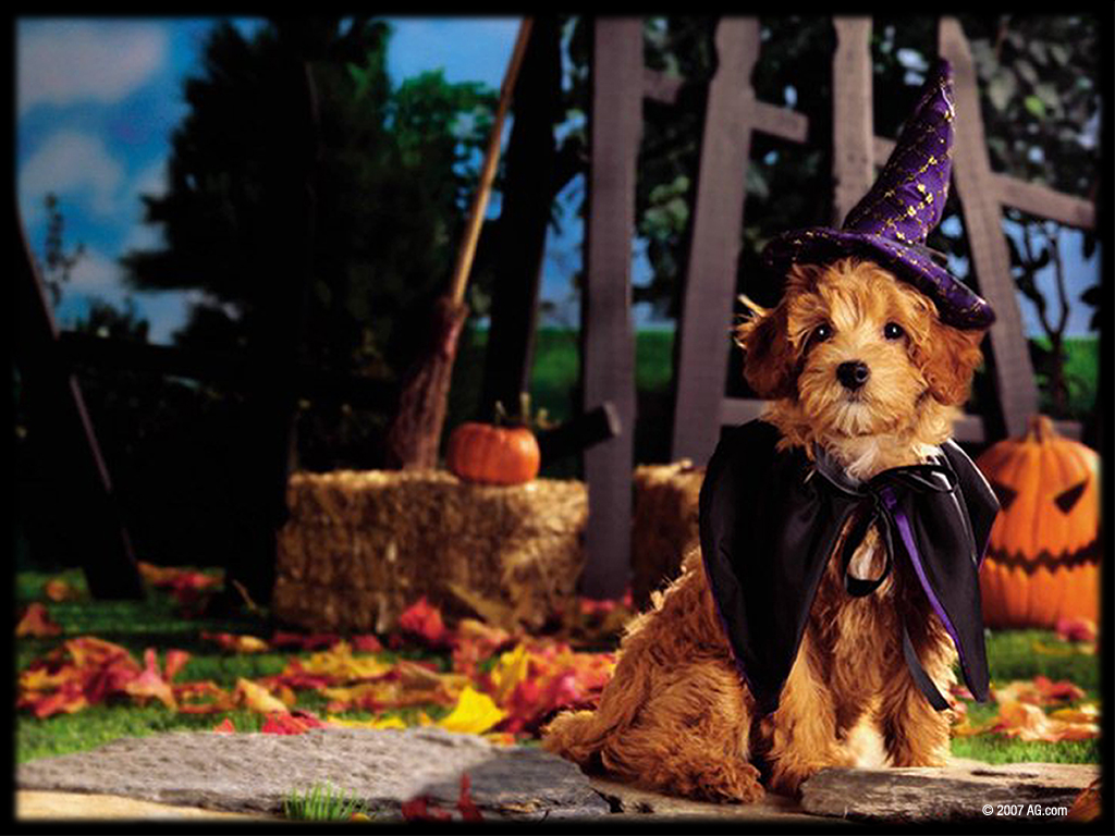 Halloween Dog Wallpaper