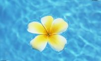 Hawaii Flowers Wallpaper