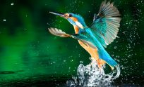 High Definition Wallpapers 1080p Free Download