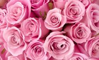 Large Size Wallpapers Of Flowers