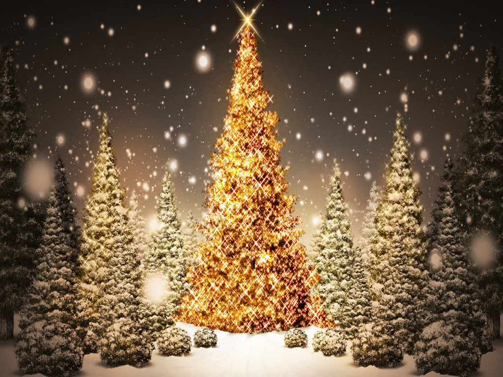 Live Christmas Trees Wallpaper