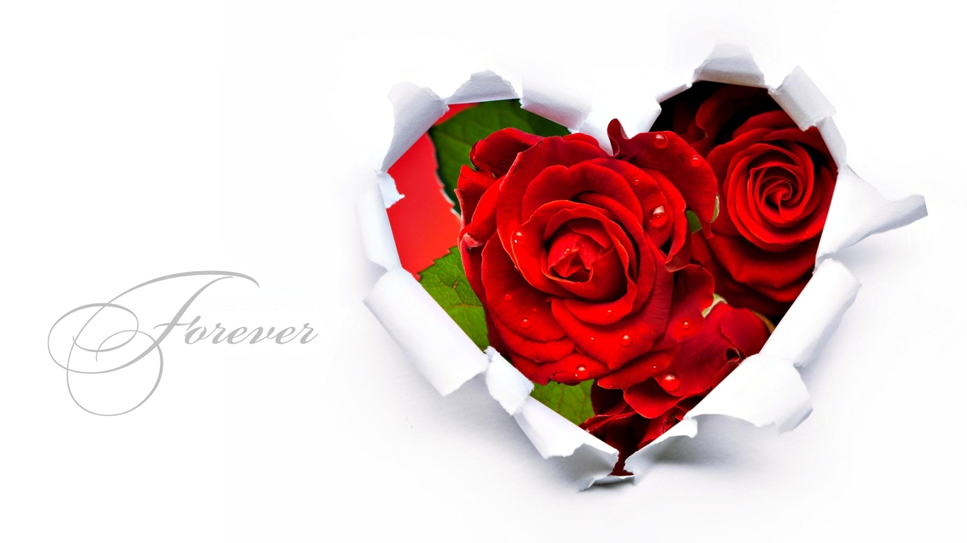 Download Love And Flower Wallpaper Gallery