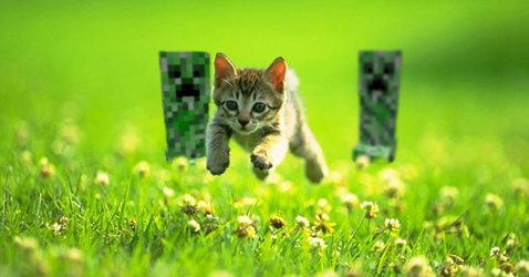 Minecraft Cat Wallpaper