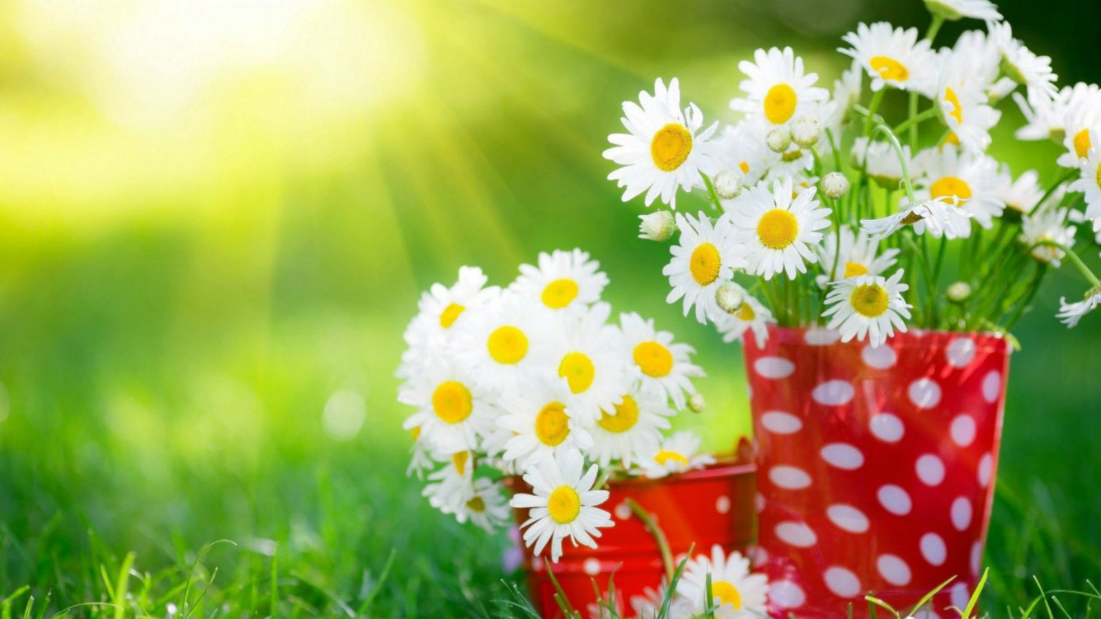Download most beautiful flowers wallpapers in the world gallery most beautiful flowers wallpapers in the world dhlflorist Image collections