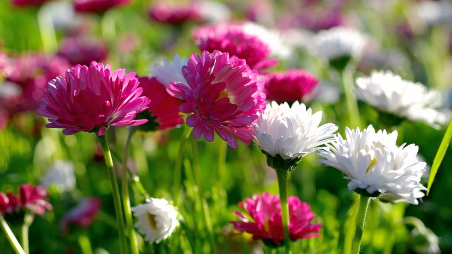 Most Beautiful Flowers Wallpapers In The World