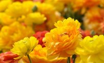 Natural Flowers Wallpapers Free Download