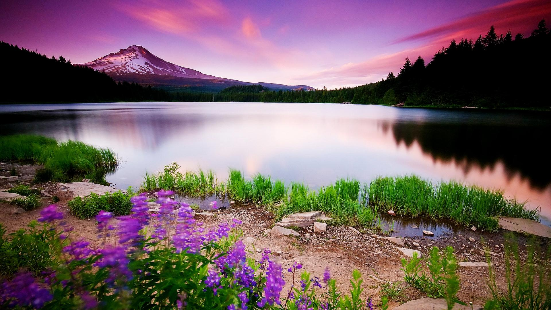 Nature Wallpapers And Backgrounds