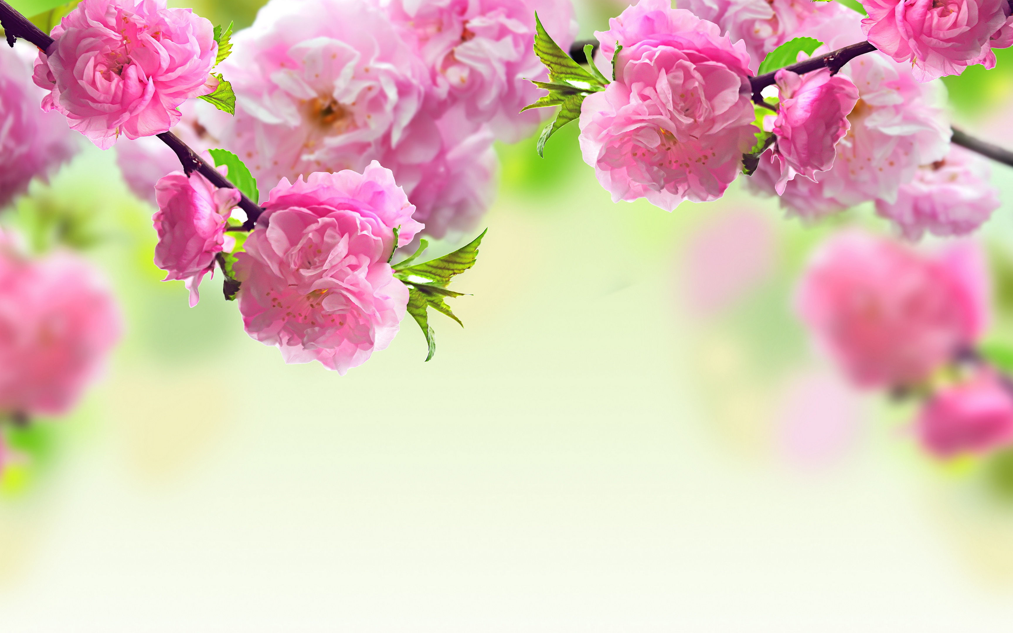 New Wallpapers Of Flowers