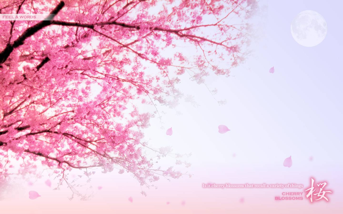 Pretty Pictures For Wallpaper