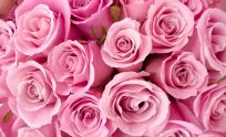 Pretty Pink Wallpaper Backgrounds