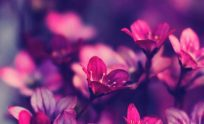 Purple Wallpapers For Iphone