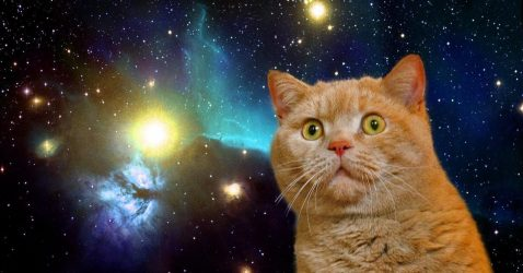 Space Cat Wallpaper