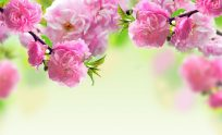 Spring Flower Wallpaper