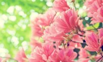 Springtime Flowers Wallpaper