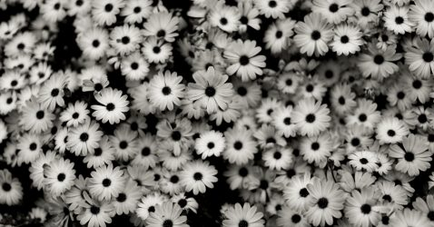 Wallpaper Black And White Flowers
