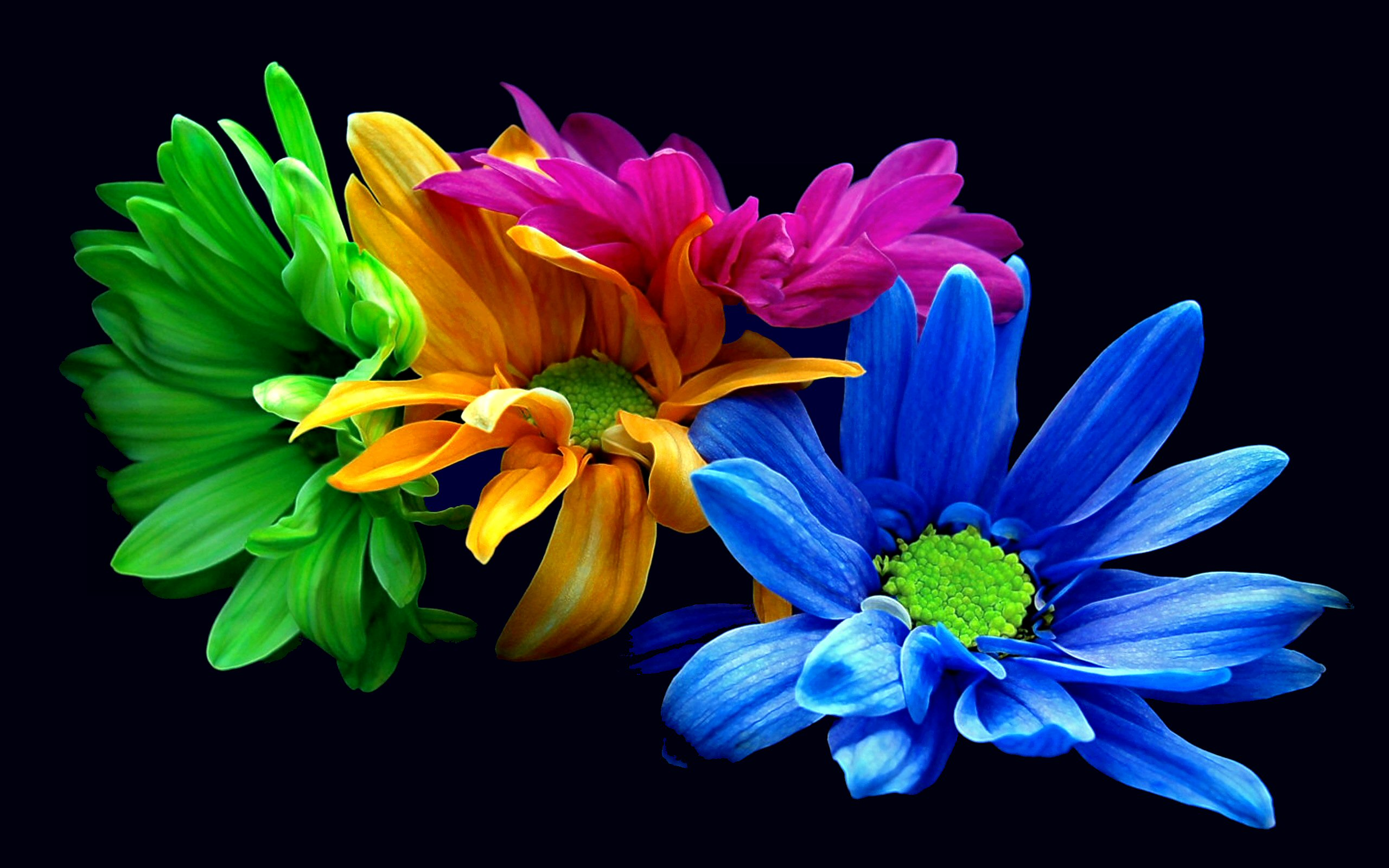 Wallpaper Colorful Flowers