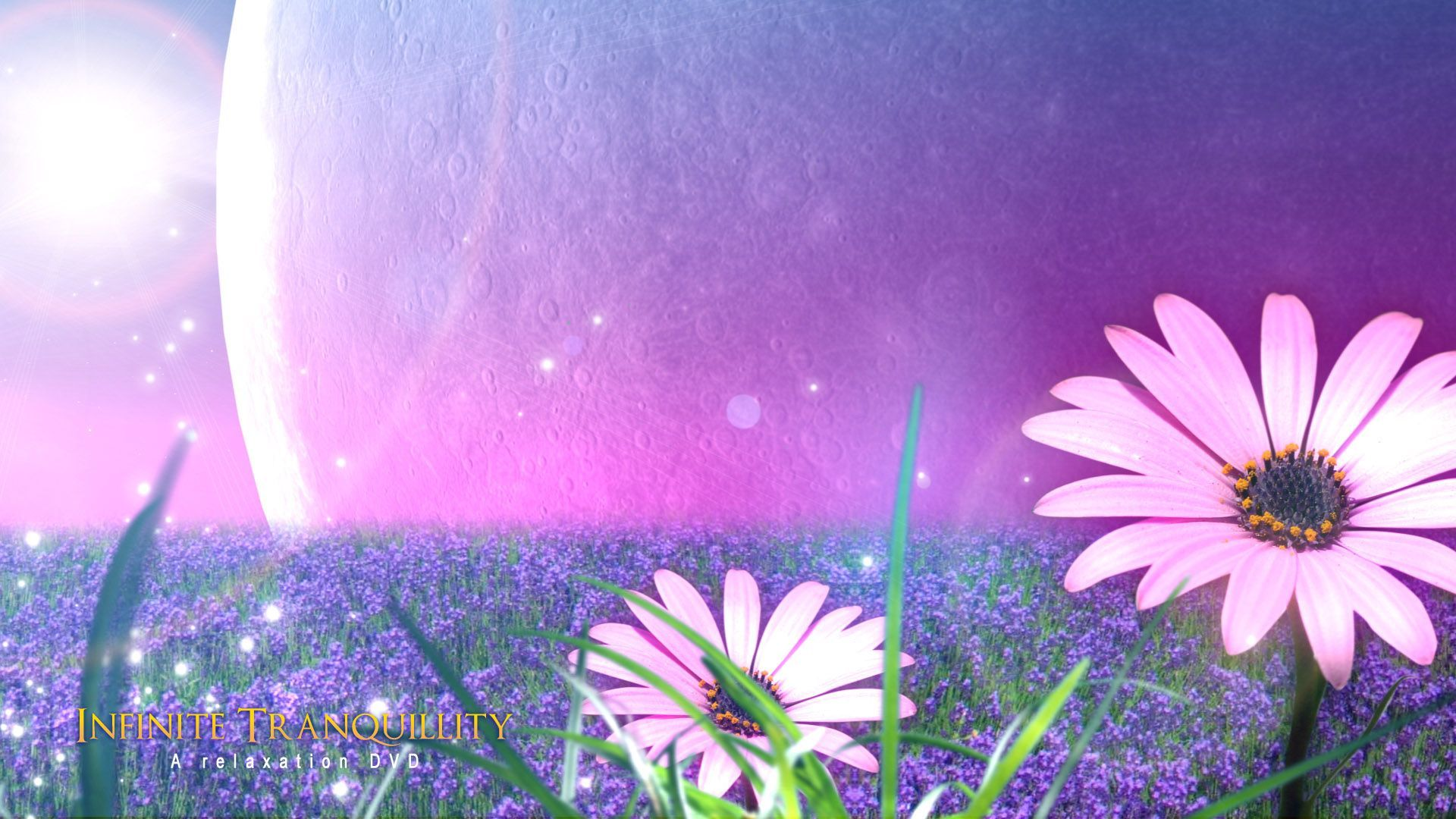 Wallpaper Flower Full Hd