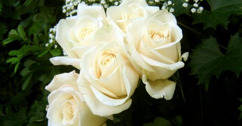 Wallpaper Flowers Roses White