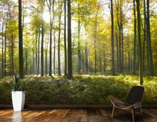 Wallpaper Murals Forest