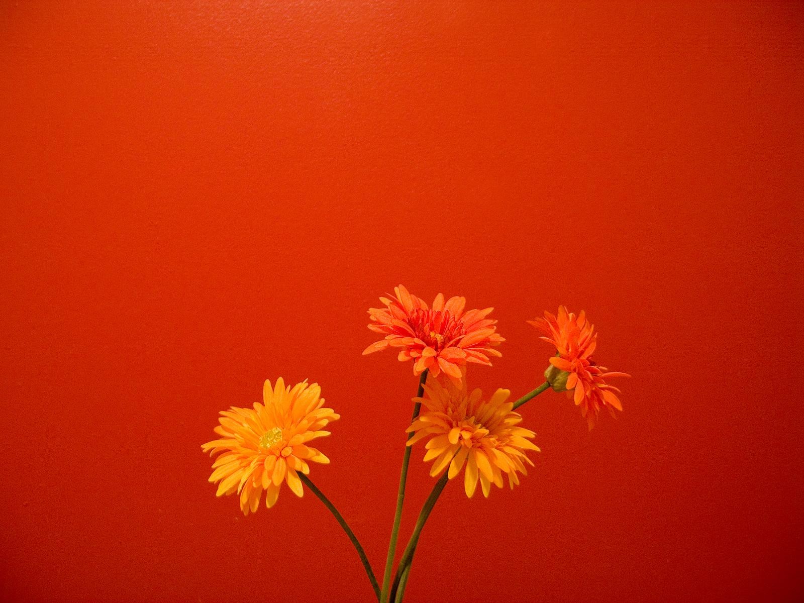Wallpaper Orange Flowers