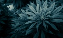 Weed Wallpapers Hd