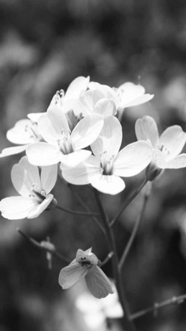 download white flower iphone wallpaper gallery